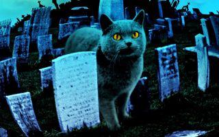 Умерла собака, кошка приметы о домашних животных