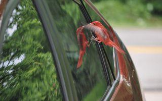 Птица ударилась в окно — примета расскажет, чего ждать