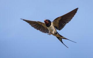 Народные приметы о птицах