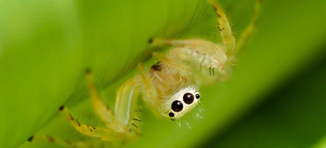 Увидеть паука в определенное время