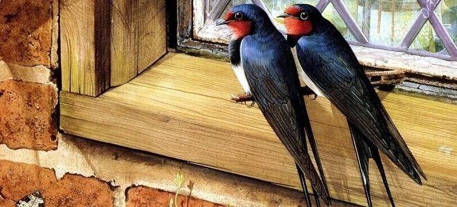 Примета ласточка залетела в дом, свила гнездо под крышей