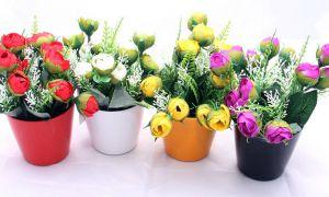 Можно ли дарить цветы в горшках — приметы