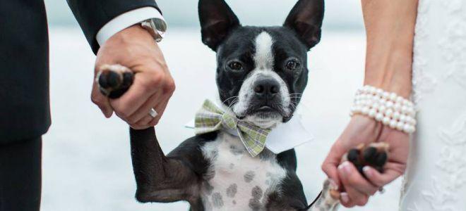 Собачьи приметы — о чем предупреждает питомец