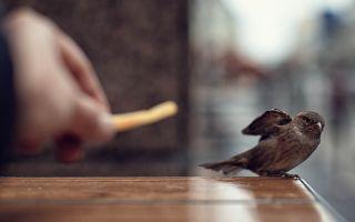 Птица залетела в дом  —  народные приметы