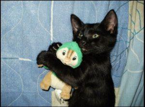 черный кот приметы