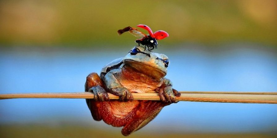 лягушка приметы