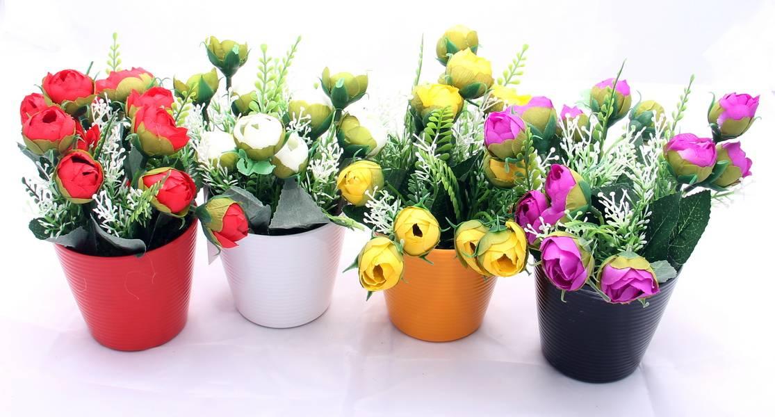 Можно ли отдавать комнатные цветы другим людям