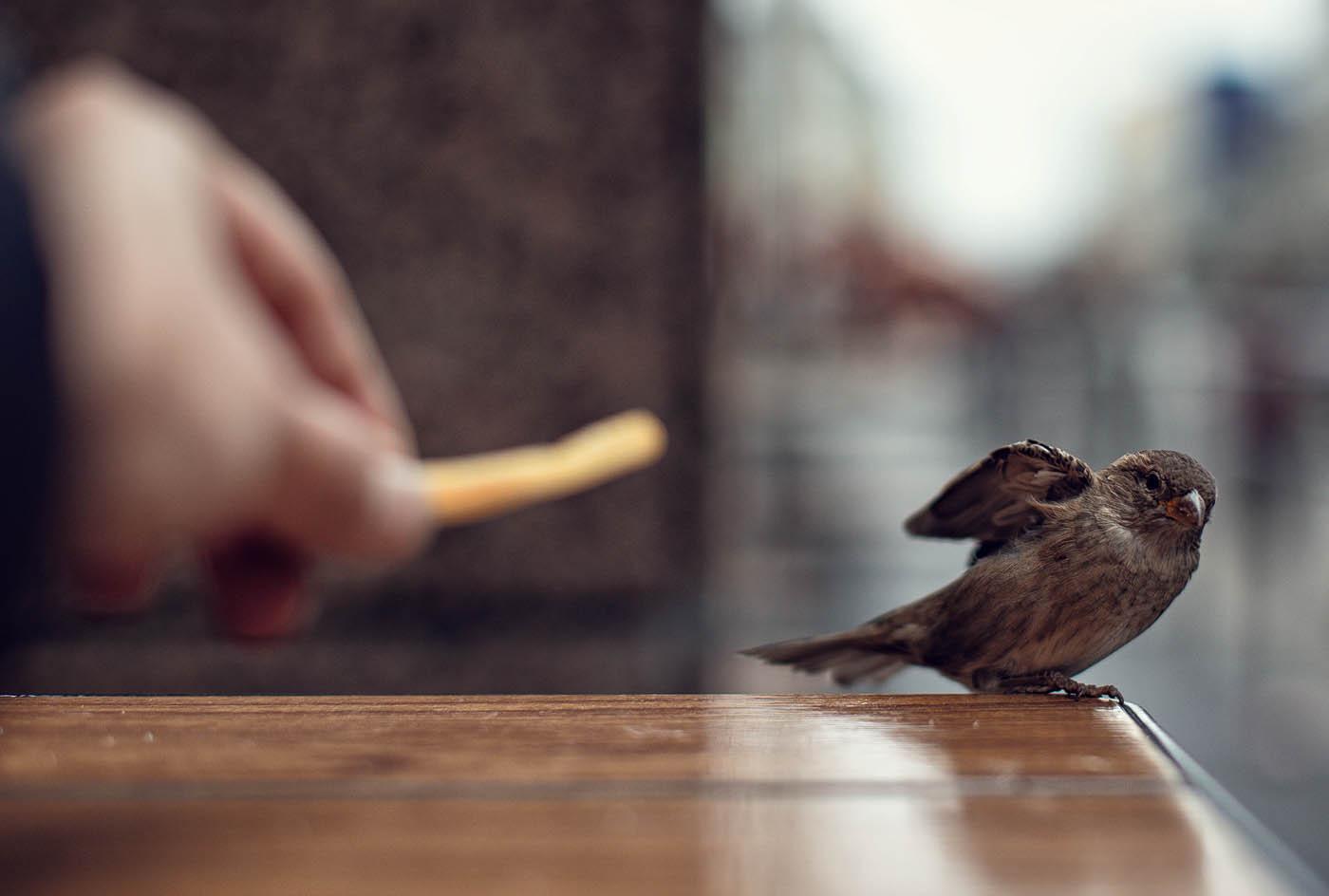 Примета птица залетела в дом расскажет о будущем