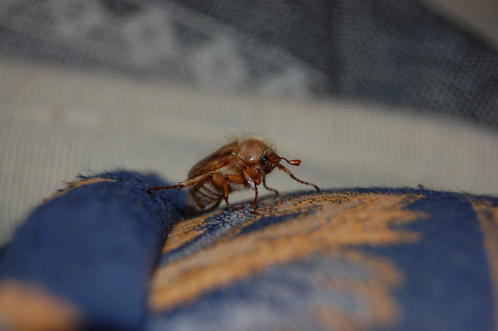 Жук оса или шмель залетел в окно примета о насекомых