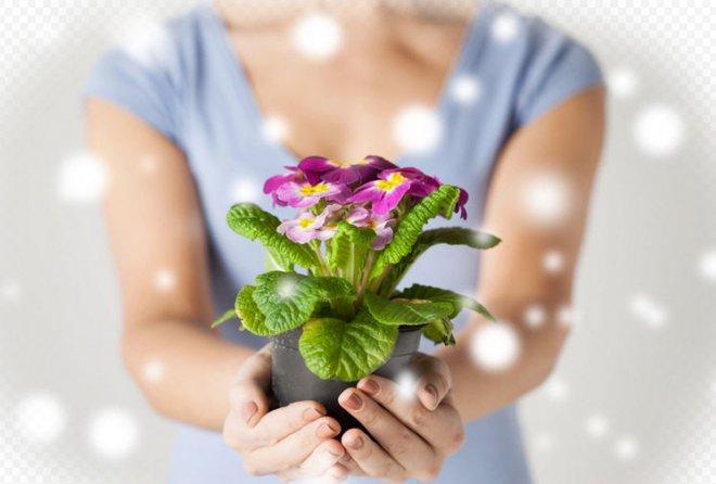 почему нельзя дарить цветы в горшках