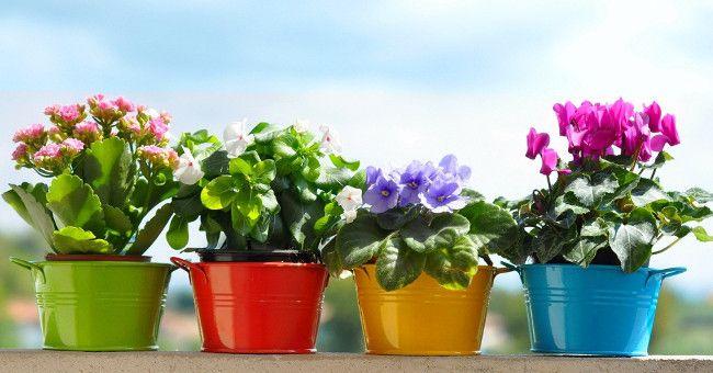 можно ли дарить комнатные цветы