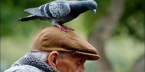 примета птица накакала на голову