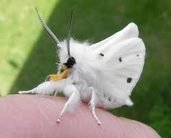 залетела бабочка примета
