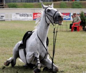 приметы лошадь