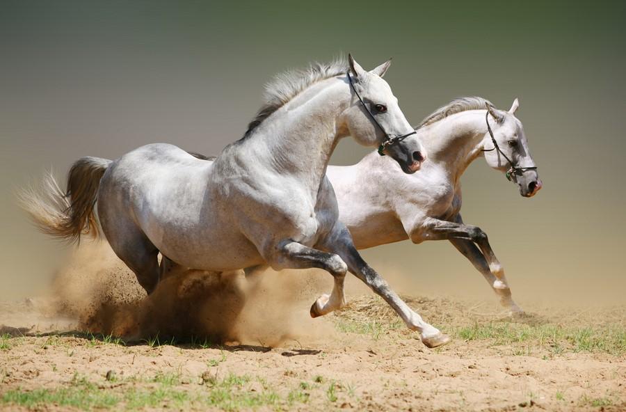 приметы лошадей