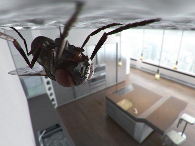мухи в квартире примета