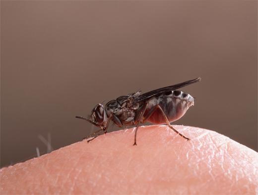 муха залетела в дом примета
