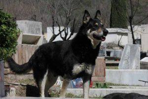 собака на кладбище примета