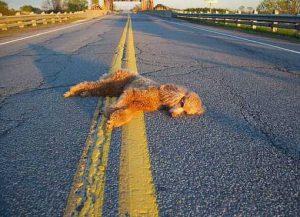 сбить собаку на машине примета