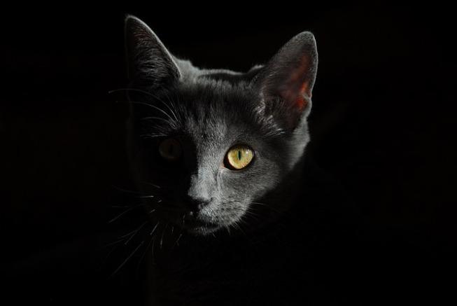 когда умирает кошка приметы