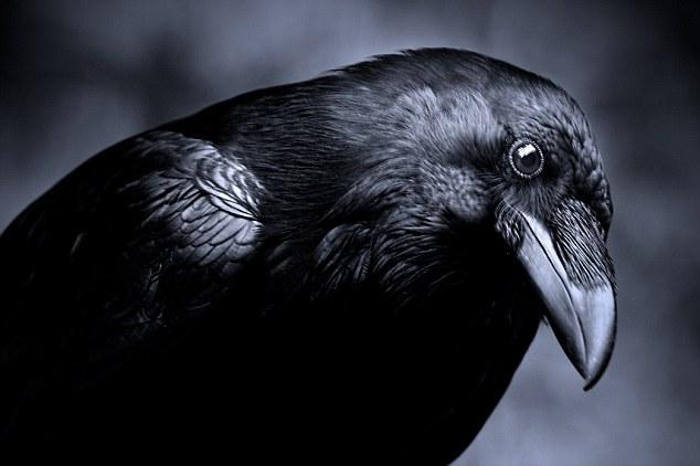 ворона залетела в дом примета