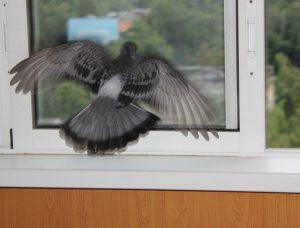 народные приметы птица бьется в окно