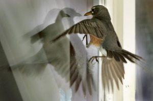 птица ударилась в окно и улетела примета