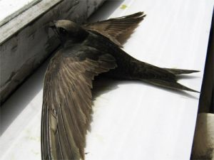 народные приметы птица залетела в дом