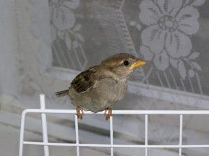 птичка залетела в окно примета