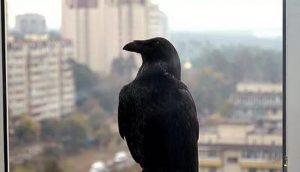 птица залетела в квартиру приметы