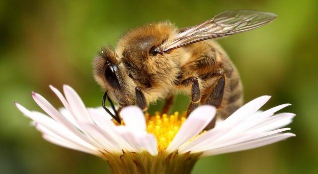 пчела приметы