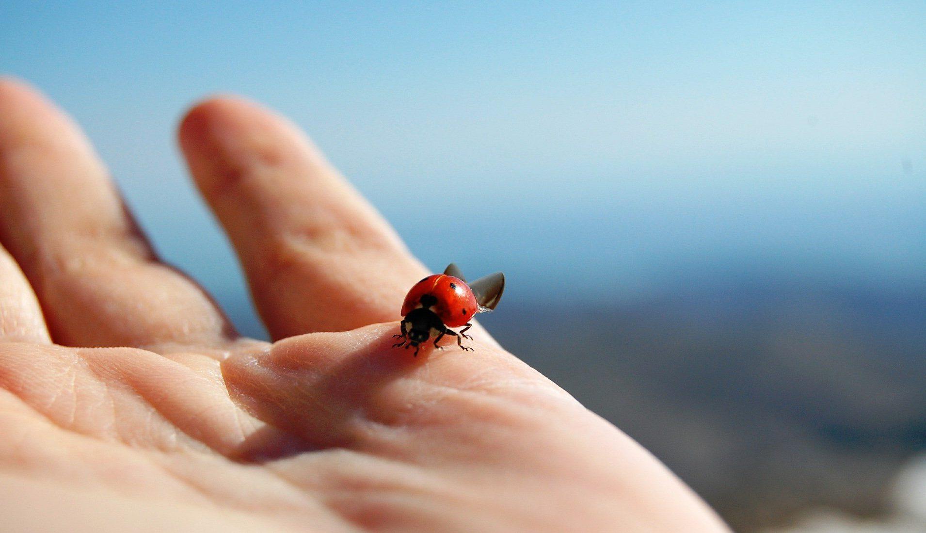 приметы жук
