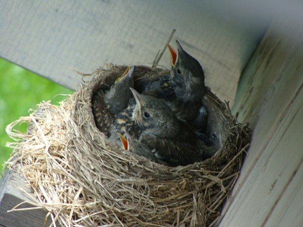 воробьи свили гнездо под крышей примета