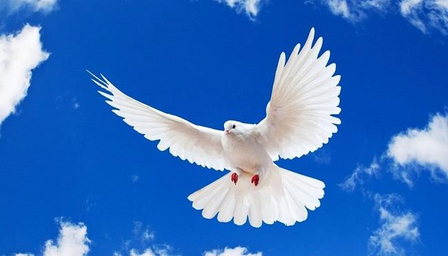 что означает белый голубь