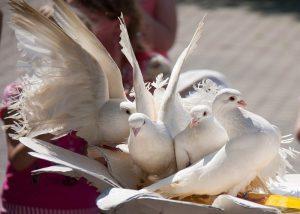 примета белый голубь сел на подоконник