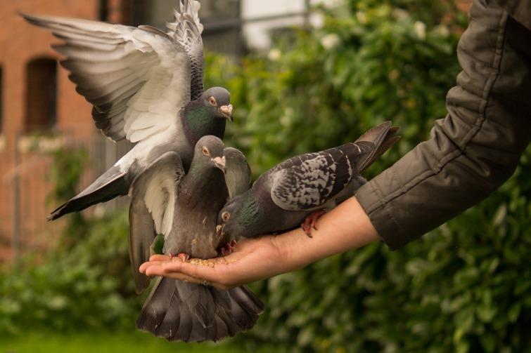 голубь коснулся крылом головы примета