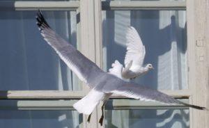 примета голубь бьется в окно