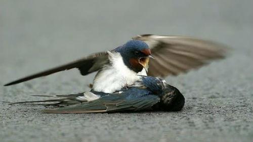 увидеть мертвую птицу примета