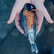 мертвая птица на балконе примета