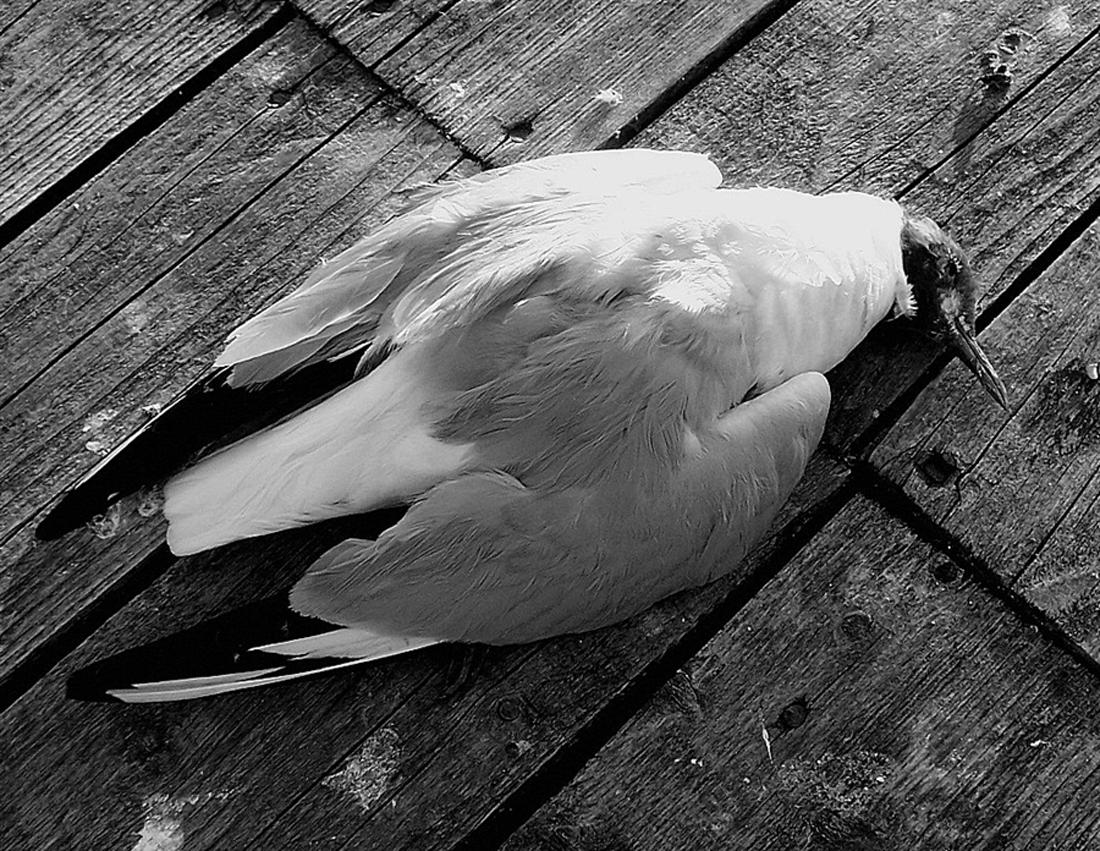 Мрачная примета — увидеть мертвую птицу